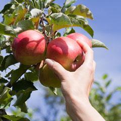 Gli alimenti biologici sono più sicuri?
