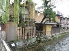 穏やかに流れる祇園白川