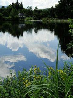 クサレダマ咲く希望湖