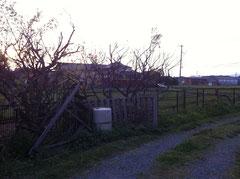 夕暮れの田園風景