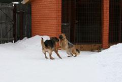 Прима (Пиля с Лесного) и Челси (Чезара из Дома Ворониной)