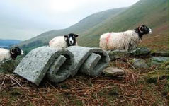 Insulation for your house from sheep - no kidding