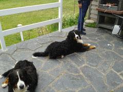 Chicco und Yumak beim Grillen° Dies Foto wurde freundlicherweise von Familie Friedrich zur Verfügung gestellt.°
