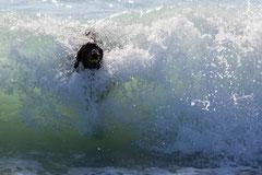 Erste Surfversuche* von F. Fuchs