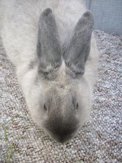 5 Monate altes Tier - das Marderkreuz bildet sich sg heraus