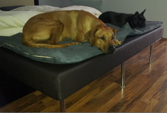Hundebett Maßanfertigung für einen Bettrahmen