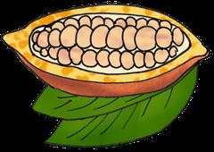 Kakaofrucht Zeichnung