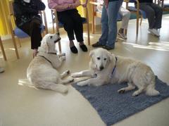 Wenn die Hunde kommen, blühen die Senioren auf. (Foto: H.G.)