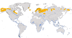 Karte zur Verbreitung des Regenbrachvogels