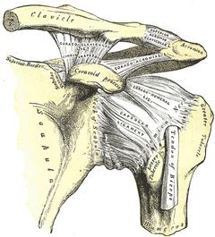 肩 五十肩 治療 痛み