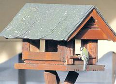 Eine Kohlmeise am Vogelhäuschen. Quelle: Uwe Hoffmann