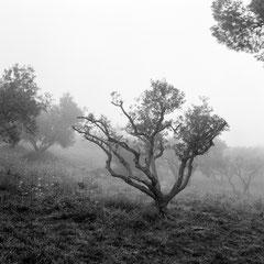 Margot Laurens's photographs on exhibit and sale at Hameau des Baux in 2018