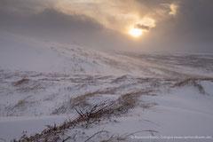 Island, bei Egilstadir
