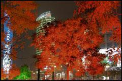 Oswietlenie drzew na Leipziger Platz