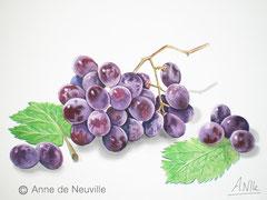 Raisins en grappe - Gouache - 80€