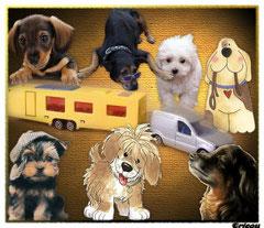 CRICOUNETTE - Les chiens aboient
