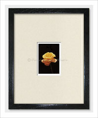 Yellow Rose - Limited Edition ACEO Print of Oil Painting