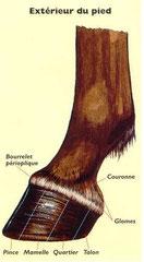 Extérieur du pied
