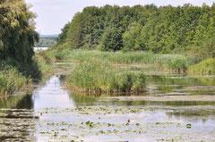 Kis-Balatoner Milanenburg-Insel /Christa Brunner(c)