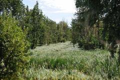 Nationalpark Balaton-Felvideeki Nemzeti Park /Christa Brunner (c)