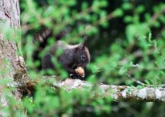 Eichhörnchen (c) Christa Brunner
