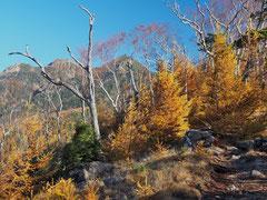 10月 権現岳を望む