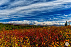 "Bild: autumn at the end of August on Dalton Highway, Alaska, ""Jamaica colours at Dalton""; www.2u-pictureworld.de"