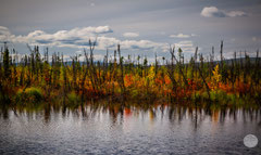 "Bild: autumn coloured nature at Dalton Highway, Alaska, ""wild mixture""; www.2u-pictureworld.de"