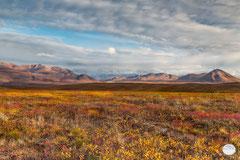 "Bild: autumn colors in northern Alaska, Brooks Range in the Arctic Wildlife Refuge, Alaska, ""autumn at Brokks Range"", www.2u-pictureworld.de"