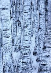 Birken im Winter, Dispersion und Kohle und Rauputz auf Karton 50x70 cm, 180 €