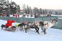 Rentierrennen  beim Wintermarkt in Jokkmokk