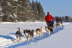 Hundspannsturer i Lappland