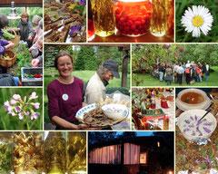 Best of Kräuter-Sinn 2007 –  Kräuterwanderungen, Events & Seminare mit Celia Nentwig