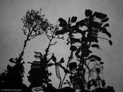experimentelle digitale Fotografie 3/2018