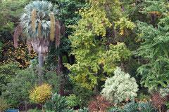 Jardim Botanico, üppiges Grün und mehr als 100 Jahre alter Baumbestand