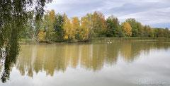Herbstliche Verfärbung am Teichrand