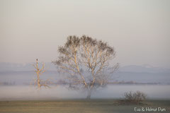 Nebelstimmung am frühen Morgen im Großtrappenrevier