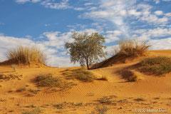 Kalahari Dünenlandschaft