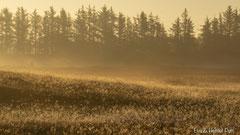 Herbstnebel lichtet sich in der aufgehenden Sonne