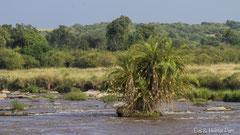 Landschaft am Mara Fluss