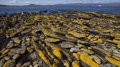 Küstenabschnitt von Falkland