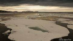 Eislandschaft mit Eisbärspuren