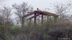 Leopard auf Dachkonstruktion
