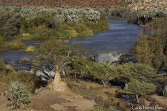 Die Epupa Fälle im Kaokofeld