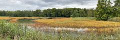 Teichlandschaft im Herbst