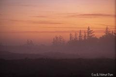Roter Morgennebel über der Waldlichtung im Hirschgebiet