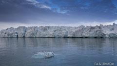 Dreizehenmöwen auf Eisscholle vor Gletscher