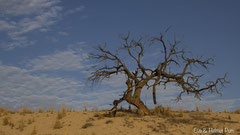 Dürrer Baum