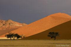 Die Dünen der Namibwüste
