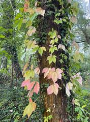 der Herbst  zeigt seine  farbenfrohe Seite